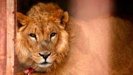 Animals remain caged in closed Buenos Aires Zoo