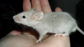California Might Be the First US State to Ban Animal-Tested Cosmetics