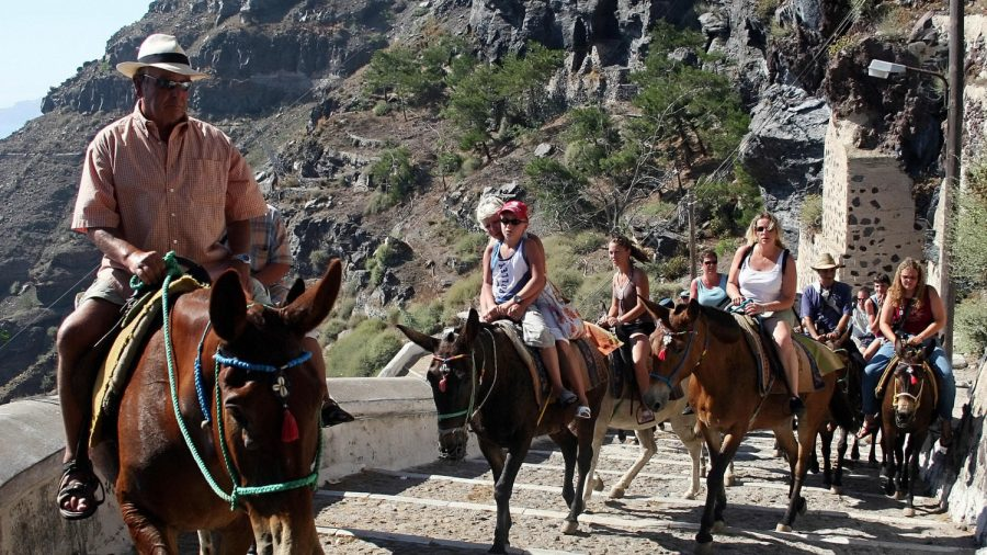 Greek Island Campaign to Offer Relief to Abused Donkeys