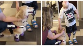 People and Pets Overcoming Adversities