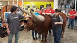 Texas Man Brings Steer to Shop to Test 'All Pets Welcome' Policy
