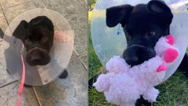 Owner Tied Puppy's Snout Shut So Tight It Needs $1900 Surgery