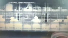 Mexican Officials Find 51 Illegal Immigrants in Truck Using Giant X-ray