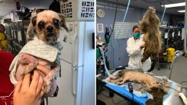 'Worst Case of Matting Ever Seen:' Humane Society Saves Neglected Dog's Life