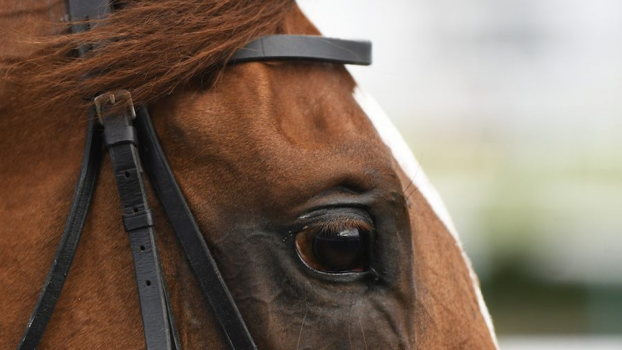 Norwegian Teen Receives Death Threats for Eating Her Own Horse After It Was Put Down