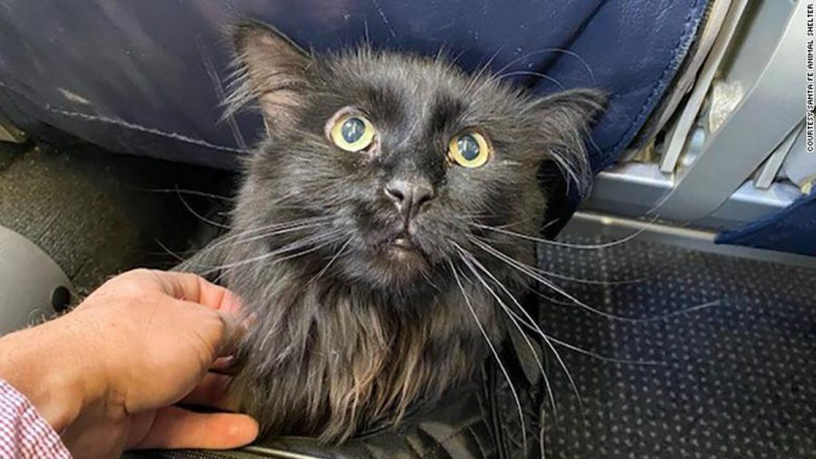 A Cat Missing for Five Years Is Found 1,200 Miles Away, Reunited With Its Owner