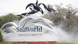 SeaWorld Puts 90 Percent of Its Workforce on Unpaid Leave