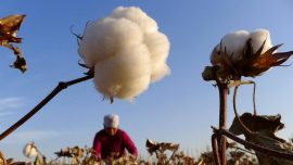 US Bars Imports of Cotton, Other Products From Xinjiang Made With Forced Labor in Xinjiang