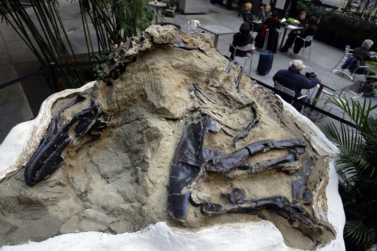 Dinosaurs' fossils is displayed