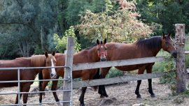 Crimes Against Horses Surge in France