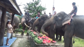 93-Year-Old Throws Birthday Party for Pet Elephants
